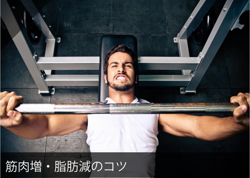 筋肉増・脂肪減のコツ